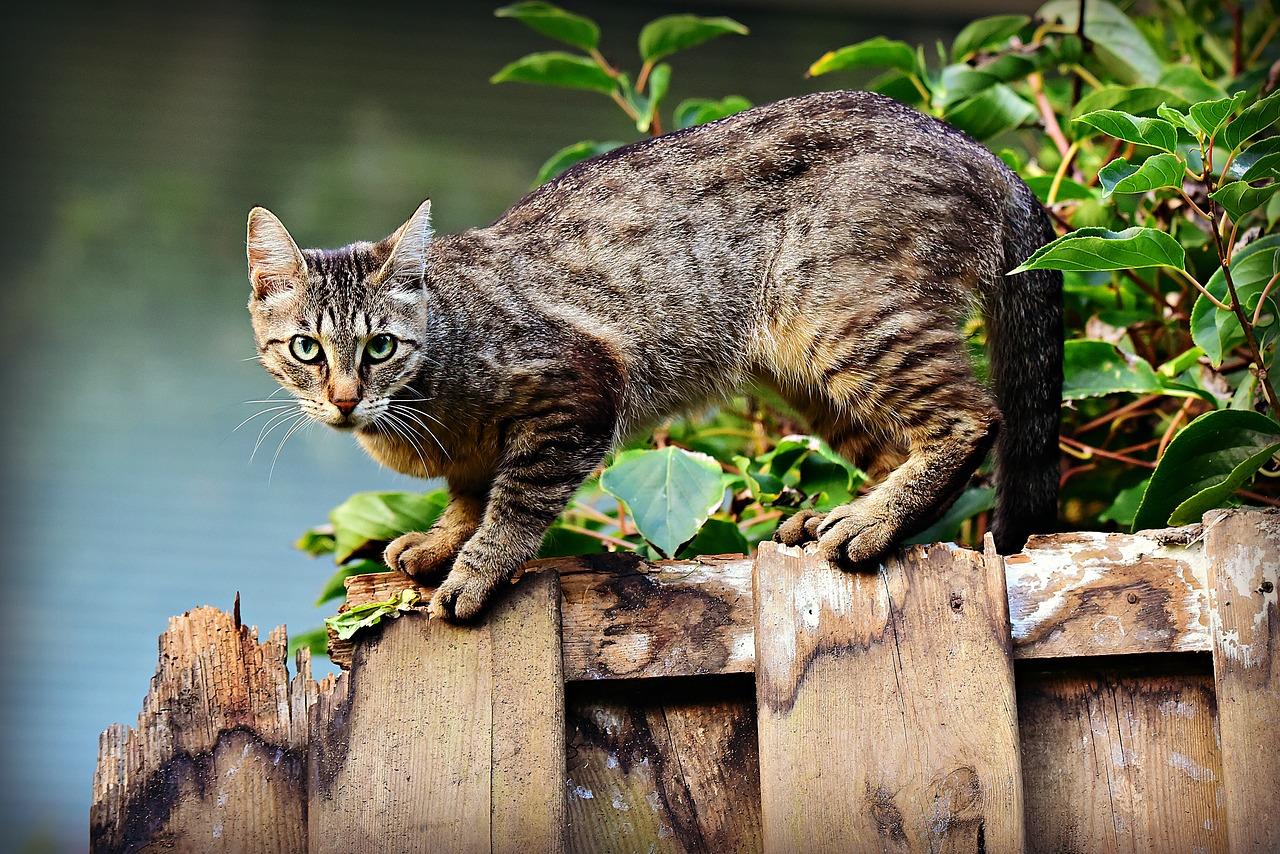 Welke kattenbak past het best bij mijn kat?
